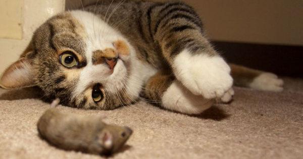 Εξωπραγματικό! Όταν οι γάτες και τα ποντίκια γίνονται οι…καλύτεροι φίλοι! (video)