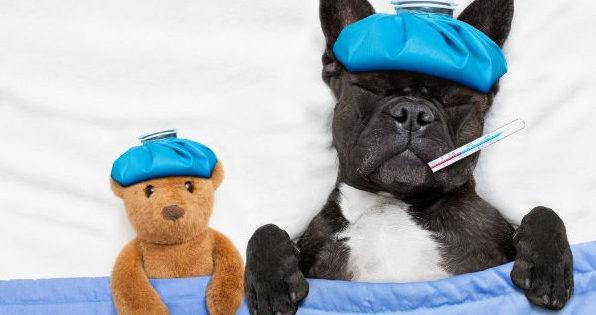 Μπορεί ο σκύλος μου να κρυολογήσει;