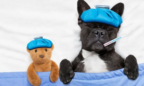 σκύλος κρυολόγημα