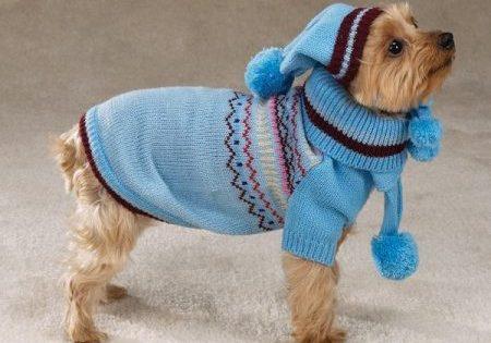 Τελικά ο σκύλος σου έχει ανάγκη από πουλοβεράκι τον Χειμώνα;