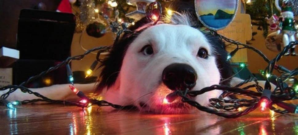 σκύλος στόλισμα δέντρου Σκύλος