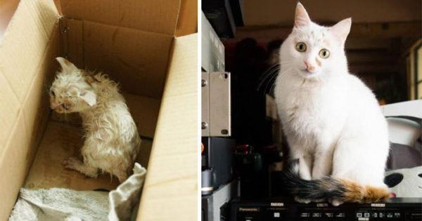 30 φωτογραφίες που αποτυπώνουν το εκπληκτικό επίτευγμα της διάσωσης ζώων