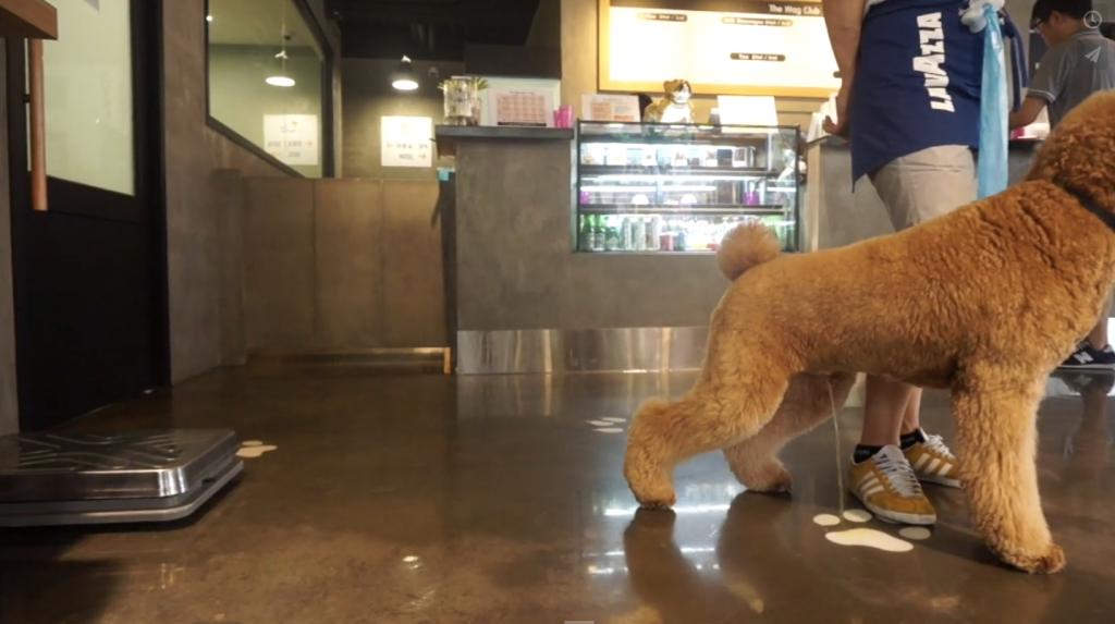 σκυλάκι Πρόστιμο