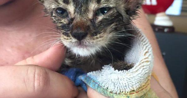 Οικογένεια καταστρέφει το αμάξι της για να σώσει γατάκι που παγιδεύτηκε μέσα