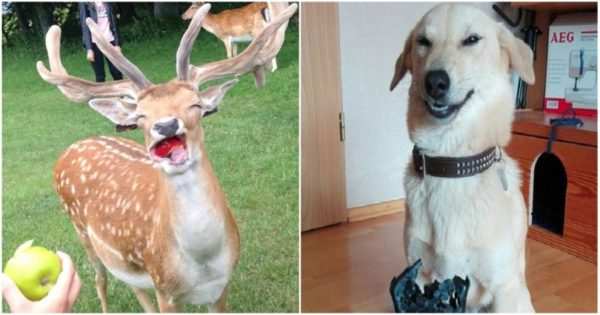 18 ζώα που ξέρουν πώς να πάρουν την τέλεια πόζα για φωτογραφία