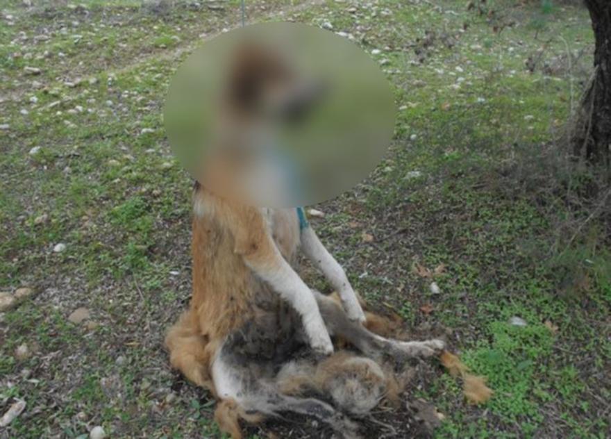 φιλόζωοι κακοποίηση ζώων