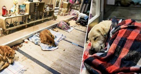 Εμπορικό κέντρο στην Τουρκία επιτρέπει σε άστεγα σκυλιά να κοιμηθούν μέσα του ώστε να αποφύγουν το τσουχτερό κρύο