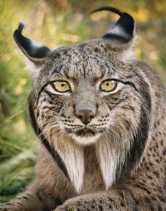 ζώα υπό εξαφάνιση ζώα