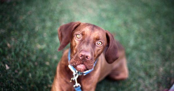 Ο νέος νόμος για τα ζώα προκαλεί αντιδράσεις: «Θολά σημεία με ωραίο περιτύλιγμα φιλοζωίας»