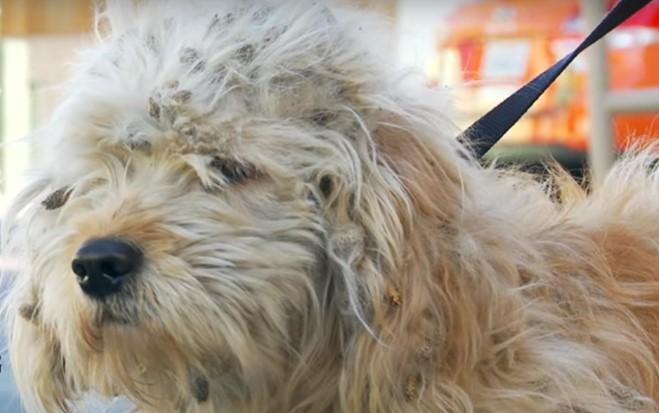 Σκύλος αδέσποτος αδέσποτο φροντίδα
