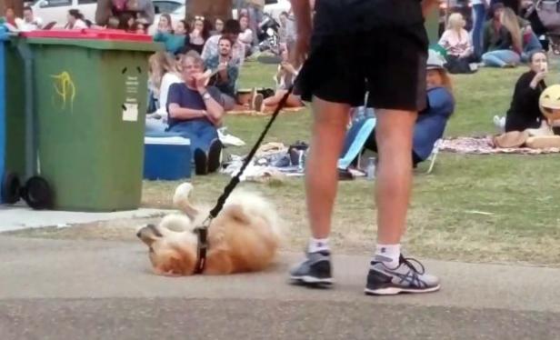 Σκύλος βόλτα