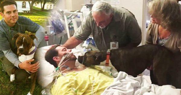 Το τελευταίο αντίο αυτού του σκύλου στον ιδιοκτήτη του που πέθανε θα σας ραγίσει την καρδιά