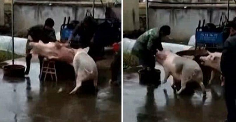γουρούνι