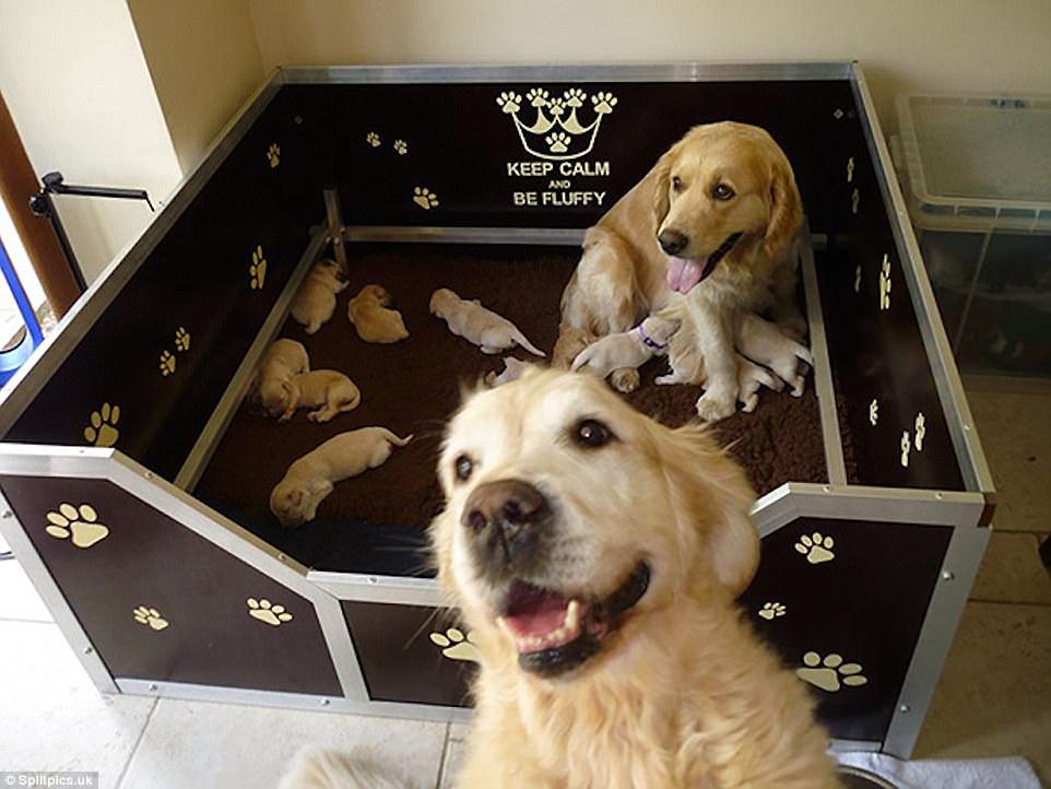 σκύλοι σκυλιά μωρά κουτάβια