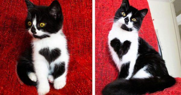 Γάτα «φοράει» κυριολεκτικά την καρδιά στο στήθος της και έχει ξετρελάνει τους χρήστες του διαδικτύου