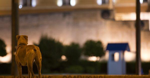 Βίντεο: Ο Γιώργος Σαμπάνης τραγουδά για ένα σκυλί «Σκιά Στη Γη» και προσφέρει όλα τα έσοδα από την κυκλοφορία του στην Ε.Δ.Κ.Ε.