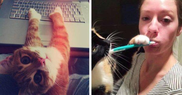 Γάτες δεν έχουν ιδέα τι πάει να πει προσωπικός χώρος