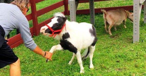 Αυτό είναι το μικρότερο άλογο στον κόσμο