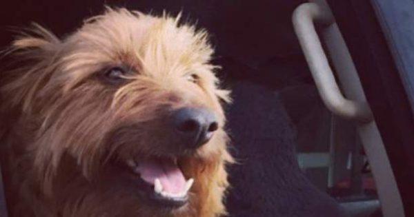 Απίστευτο: Αυτός ο σκύλος ταξίδεψε 1.500 χλμ. κάνοντας… ωτοστόπ [εικόνες]
