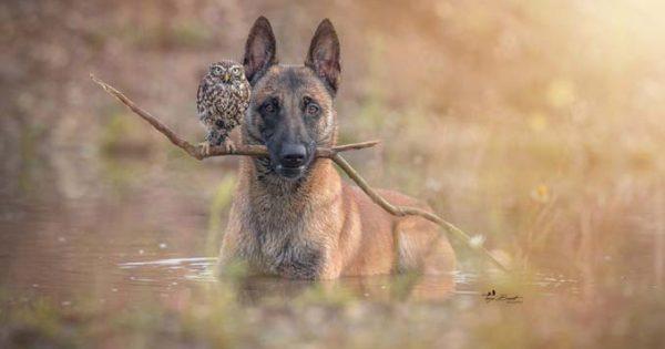 Η ασυνήθιστη φιλία ενός σκύλου με κουκουβάγιες μέσα από εκπληκτικές φωτογραφίες