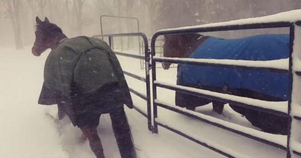 Κτηνοτρόφος άφησε άλογα να βγουν στο χιόνι να παίξουν και η αντίδραση είναι απλά ξεκαρδιστική