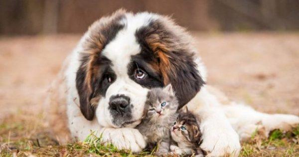 Αυτές είναι οι μεγαλόσωμες ράτσες σκύλων