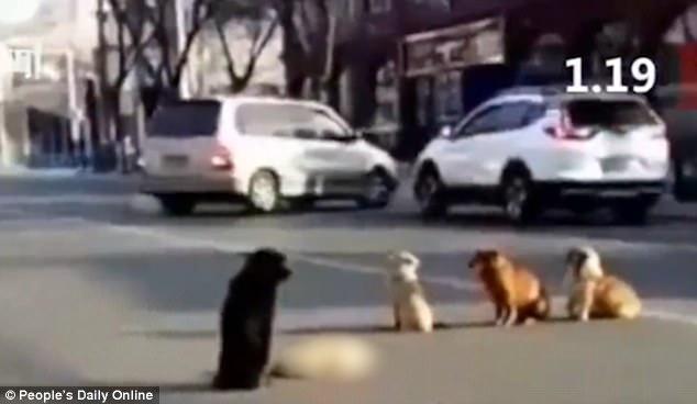 Κίνα αδέσποτα σκυλιά