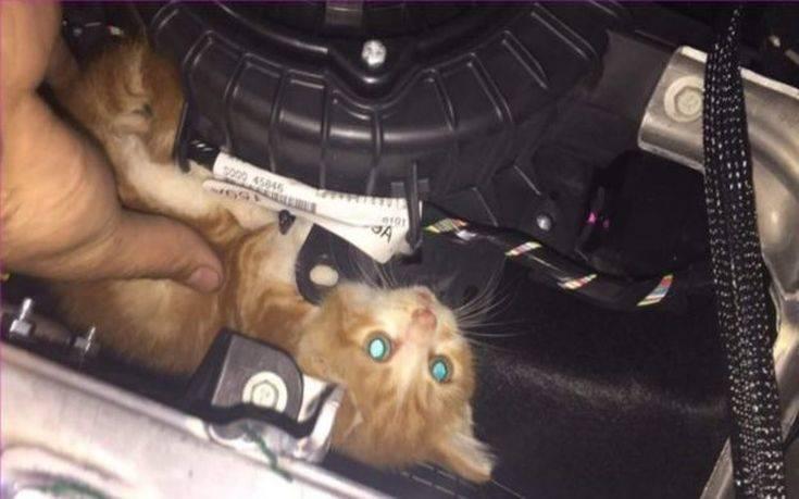 διάσωση γατιού διάσωση γάτα διάσωση Γάτα