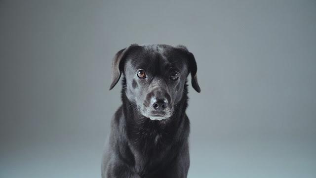 Βίντεο Αδέσποτος σκύλος Αδέσποτα