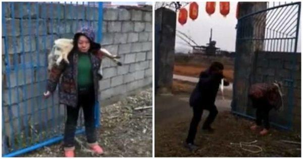 Μαστίγωσαν δημόσια Κινέζα επειδή σκότωσε σκύλο με βελάκια που περιείχαν δηλητήριο