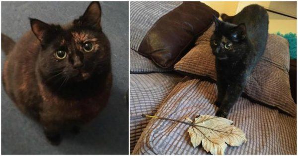 Γάτα έφερνε κάθε πρωί για δώρο στον ιδιοκτήτη της ποντίκια και πουλιά και όταν τη μάλωσε, άρχισε να του φέρνει τεράστια φύλλα