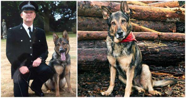 Γενναίος αστυνομικός σκύλος αρνήθηκε να εγκαταλείψει τον αστυνομικό συνάδερφο του ακόμα κι όταν δέχθηκε επίθεση με μαχαίρι 25 εκατοστών