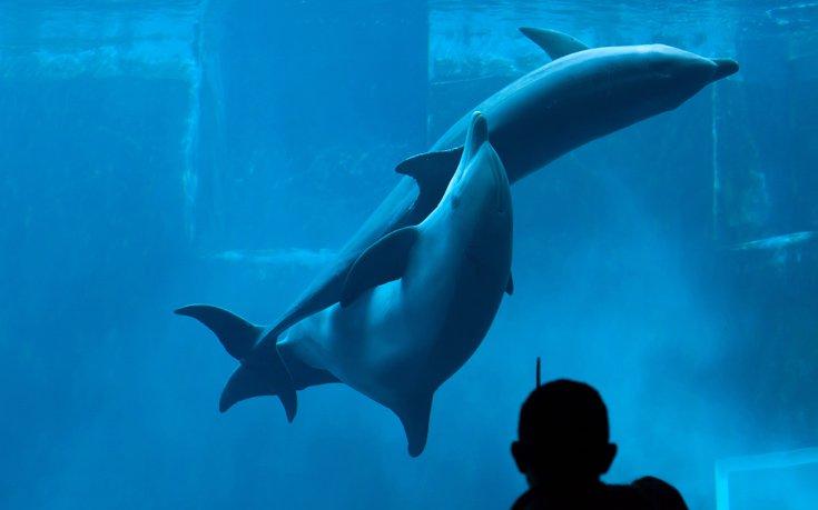 νοημοσύνη δελφίνια