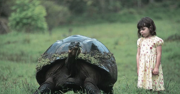 Γιγάντιες χελώνες στα Γκαλαπάγκος