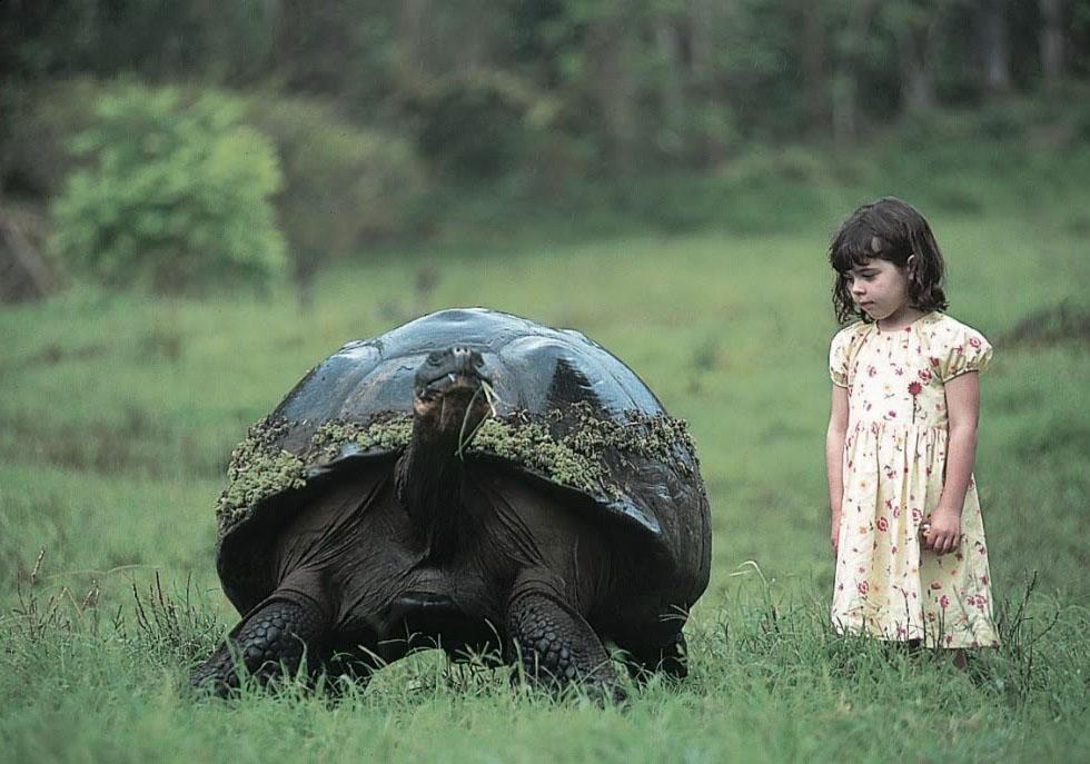 Isabella Lindblad & tortoise