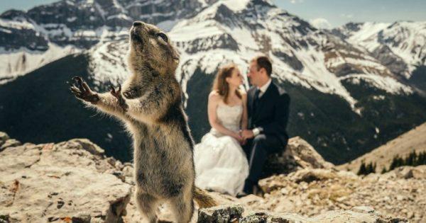 Ζώα που… πρωταγωνιστούν σε φωτογραφίες γάμου