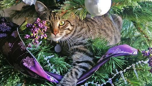 Γάτες που κλέβουν τις εντυπώσεις δίπλα σε Χριστουγεννιάτικα δέντρα!