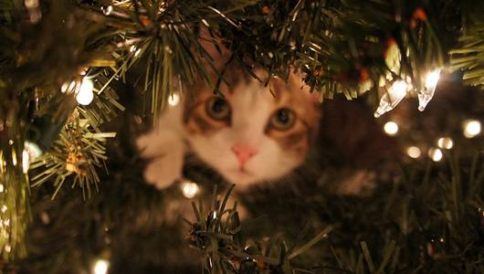 χριστουγεννιάτικα δέντρα γάτες