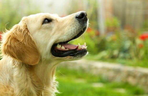 σκύλος μυρωδιά μυρωδιά σκύλου