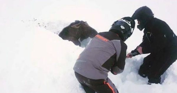 Έσωσαν παγιδευμένο ελάφι μέσα από το χιόνι