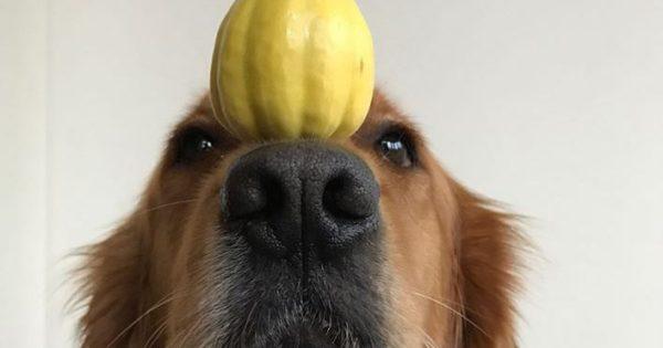 Αυτός ο σκύλος μπορεί να ισορροπήσει τα πάντα στη μουσούδα του!
