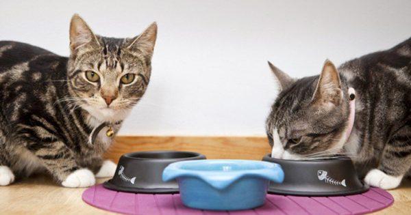 Οι γάτες είναι «δεξιόχειρες» και οι γάτοι «αριστερόχειρες»