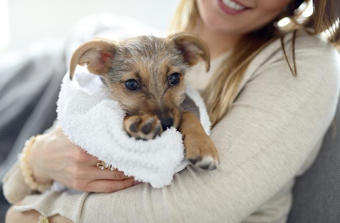 Σκύλος πατουσάκια σκύλου