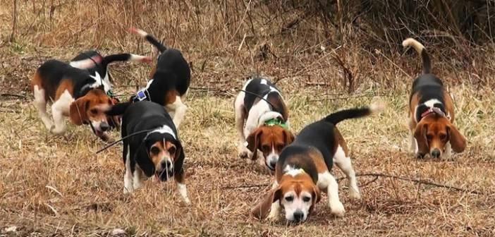 νομοσχέδιο ζώα ζώα νόμοι ζώα