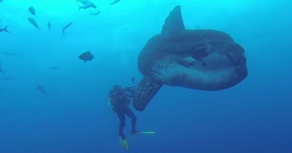 Ζάκυνθος: Εθεάθη το σπάνιο ψάρι-τέρας που ζει στον Ατλαντικό! (βίντεο)