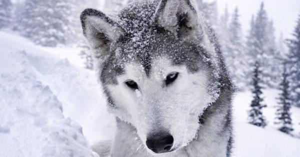 Νέα θεωρία: Δεν εξημέρωσε ο άνθρωπος το σκύλο. Ο σκύλος εξημέρωσε τον άνθρωπο!