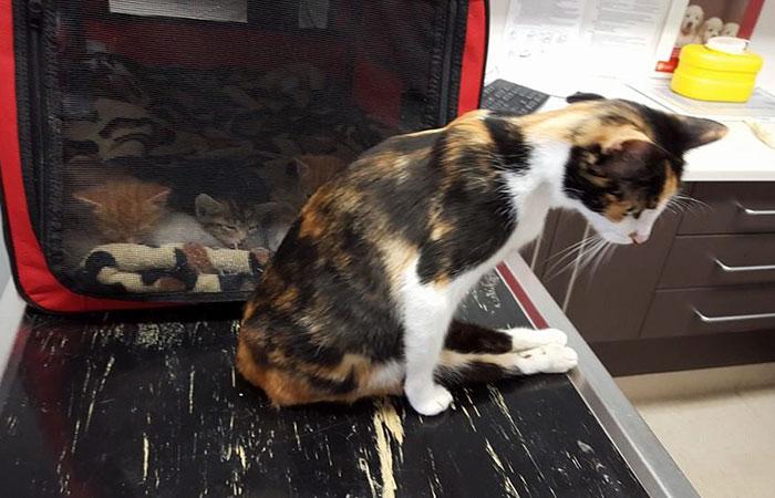 γατάκια Γάτα