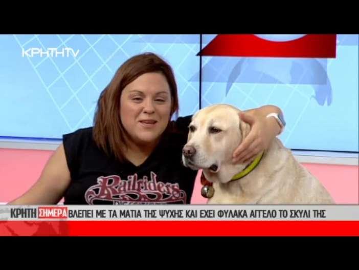 σκύλος οδηγός Σκύλος σκύλοι θεραπείας