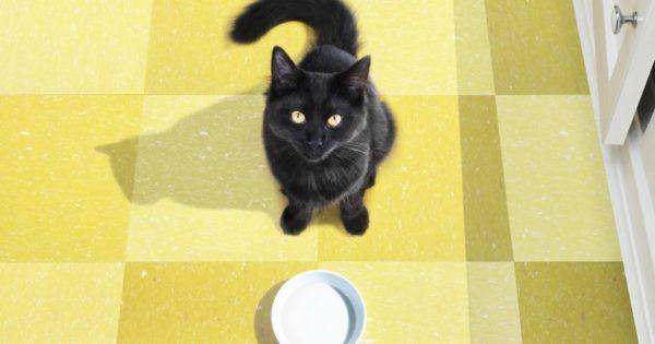 Τρίτη και 13: Αφήστε ήσυχες τις μαύρες γάτες