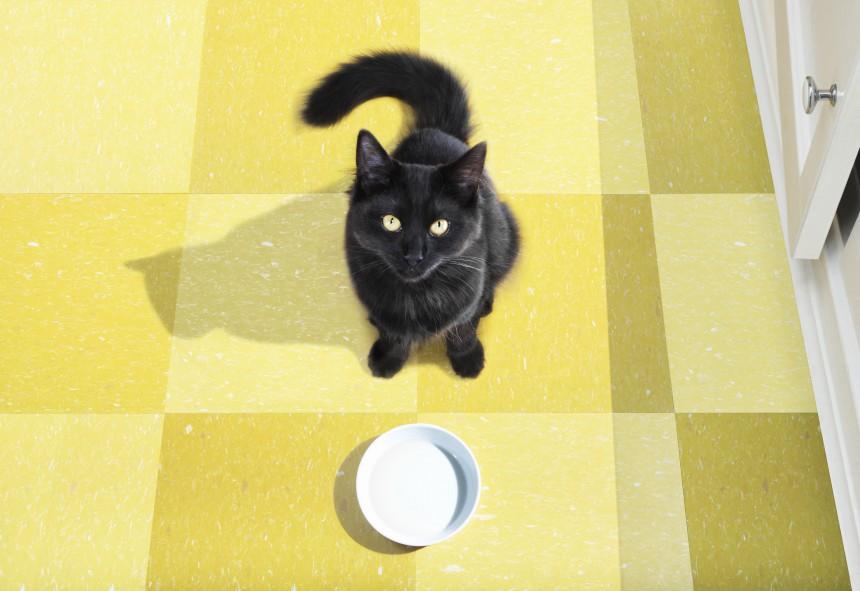 1330076_black-cat_1